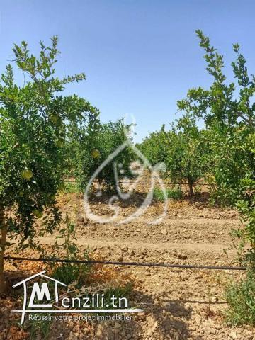 10 Hectares à El Fahs, Zaghouen