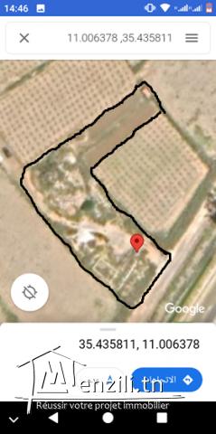 terrain a vendre ksouressef mahdia surface 3150m contact 99000783
