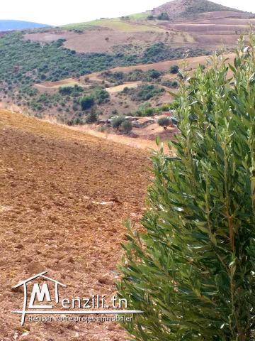 A vendre terrain agricole #Bizerte