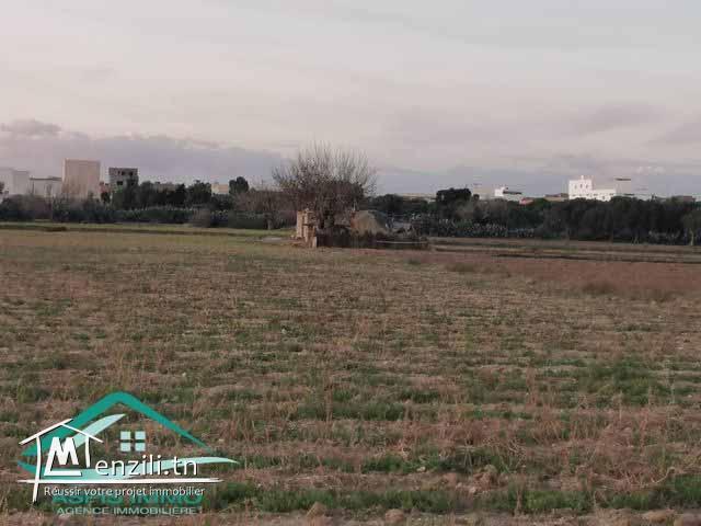 Terrain agricole 2620 m² à Kelibia
