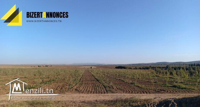للبيع أرض فلاحية في عين غلال أوتيك