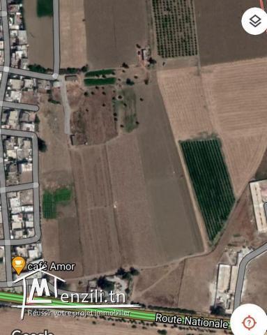 A vendre Terrain a Jdeida de 15000 m2