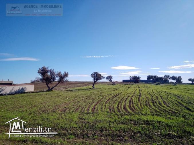 un terrain à Beni Messlem.