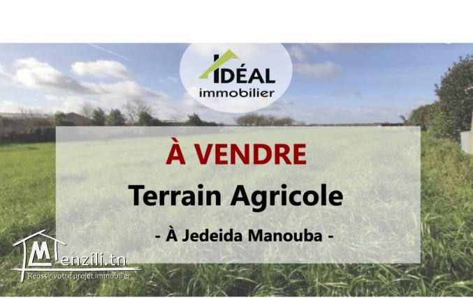 """Terrain agricole à Jedeida"