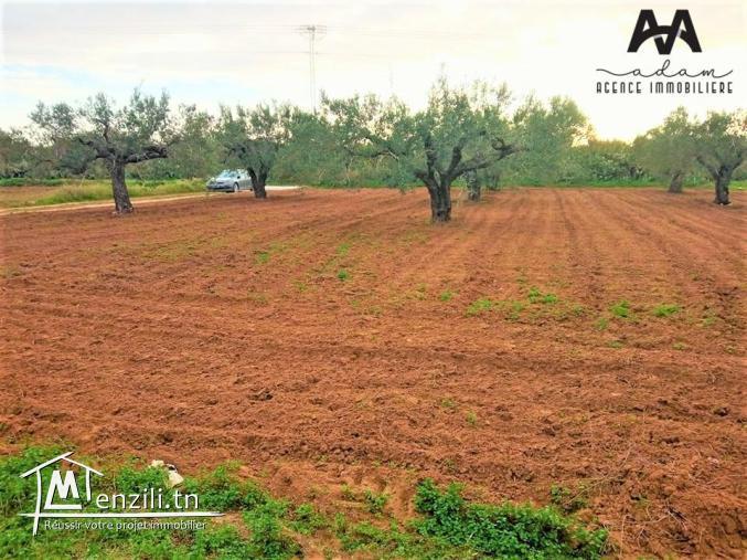 Un beau terrain agricole qui fait le coin à Daroufa, Al-Maamoura, Nabeul