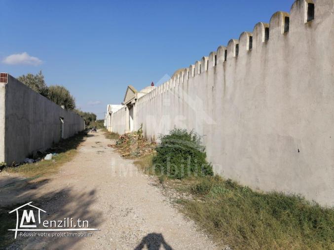 A vendre un terrain à Hammamet 51 333 131