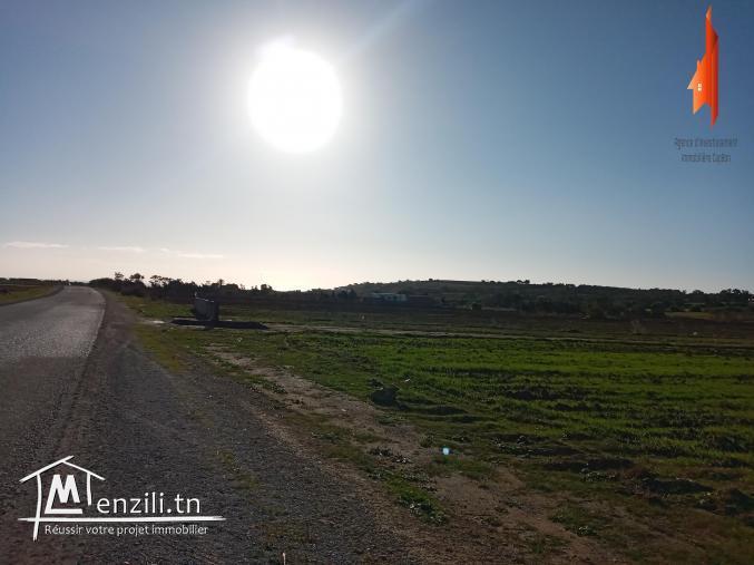 A vendre terrain agricole à Kelibia