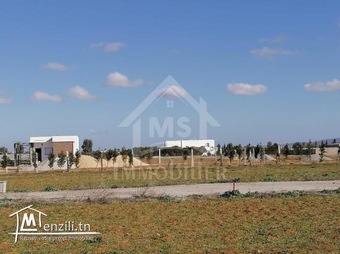 A vendre terrain à Hammamet 51 333 131