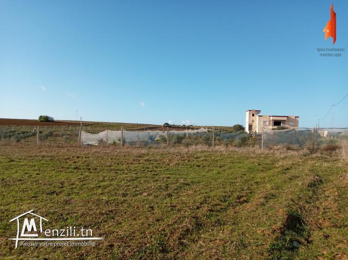 terrain à vendre de 6000 m2 à Tamozrat Kélibia