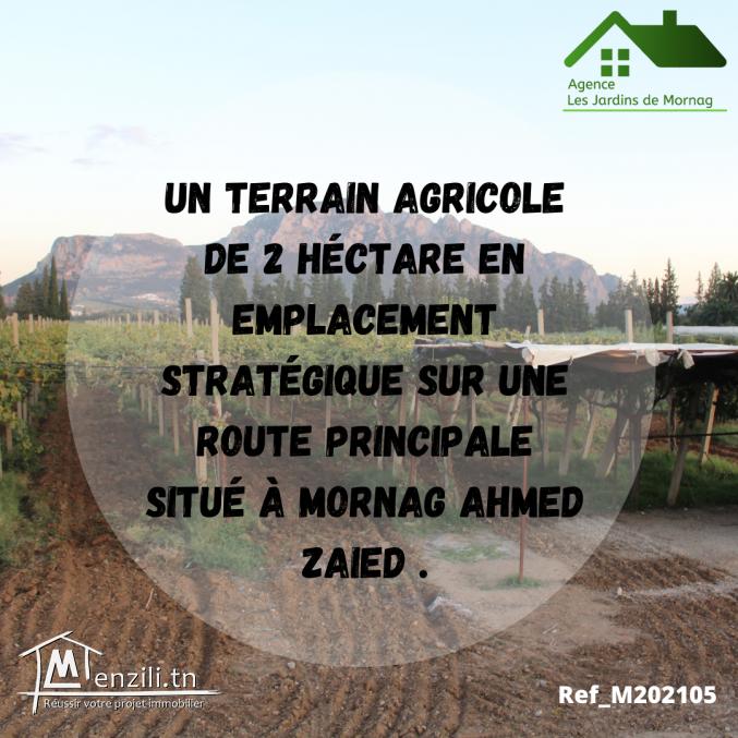 Un terrain agricole de 2 hectares à Mornag