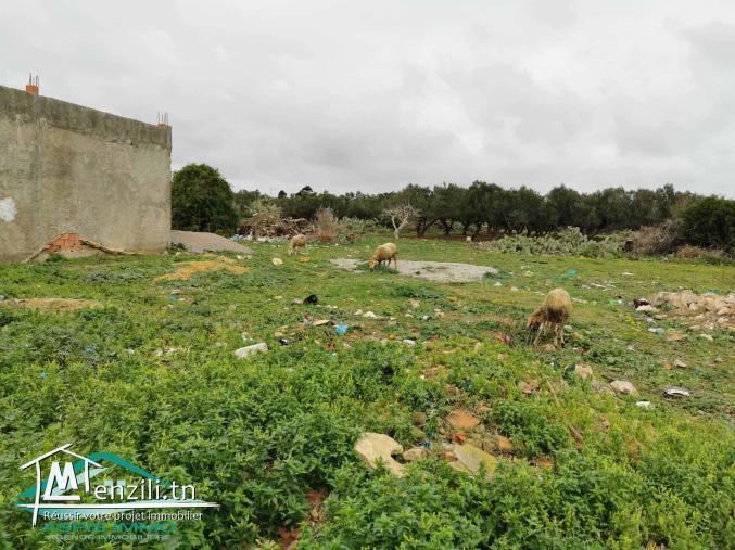 Terrain d'habitation 150 m² à Kelibia