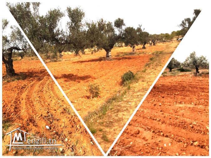 Terrain Agricole de 8285M² à Sidi Bouali Hotmen