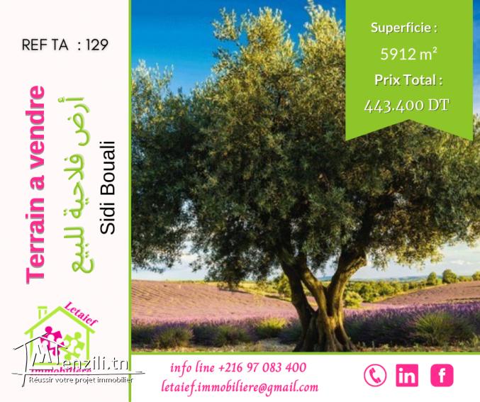 Réf d'agence : 129Terrain de 5912 m² a Sidi Bouali