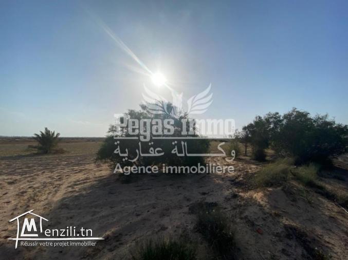 A vendre un joli terrain à Sidi jmour, Djerba