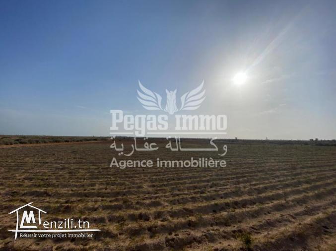 A vendre un grand terrain à mellita Houmet essouk ,Djerba