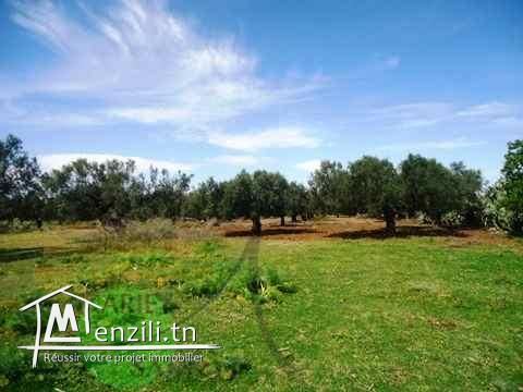 A VENDRE - A Sidi Bouali, Ouriemma 4300M²