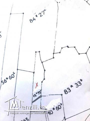 Terrain 1293M² planté Des Oliviers à Kalaa Sghira