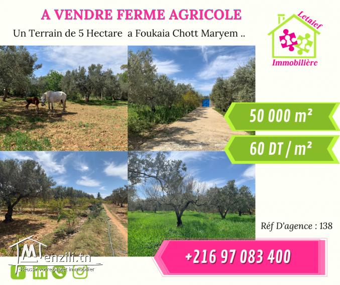 Réf D'agence : 139 Terrain de 5 hectare a foukaia Chott maryem