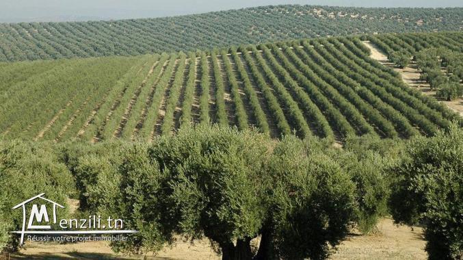 A Vendre ferme de 20 Hectares à Béja