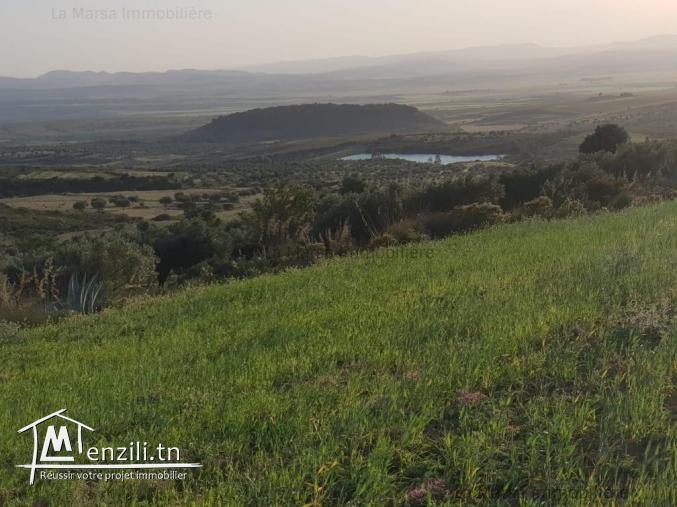 A Vendre des lots de terrain à Zaghouan