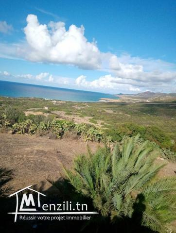 Lot terrain 3 hectares à houichette Dar janna bizerte