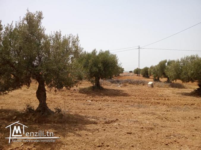 une Maison route sidi jdidi Hammamet yasmine