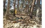 غابة للبيع