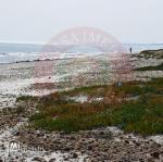 Terrain pied dans l'eau à Kelibia