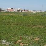 قطعة أرض في قليبية قريبة من الطريق الرئيسي