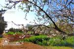 قطعة أرض للبيع في غارالملح