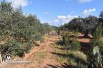 AV un terrain à sidi Hamed (Hammamet).