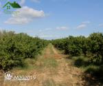 Vente de 2 terrains agricoles: Terrain A et Terrain B .